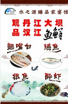 野生鱼宣传