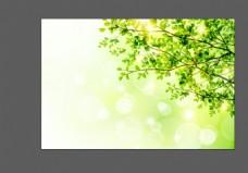 矢量春季树木