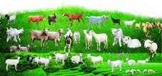 真山羊抠图透明底(图片已分层)