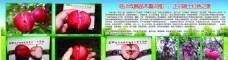 果树苗木广告