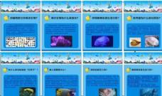 幼儿园 海底世界动物介绍