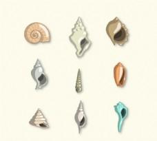 彩色海螺和贝壳设计矢量图