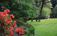 草地草坪红花