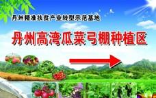 瓜菜弓棚种植区