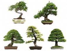 园林盆栽素材
