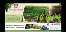 葡萄园广告