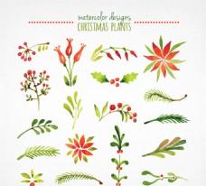 水彩圣诞植物