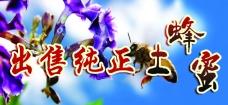 蜂蜜  海报 展板