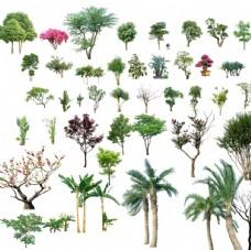 清晰的 中層樹