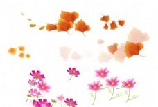 枫叶 花朵