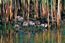螃蟹  河蟹 盘锦河蟹